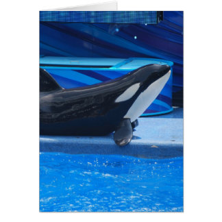 Posing Orca Greeting Card