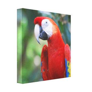 Posing Parrot Canvas Print