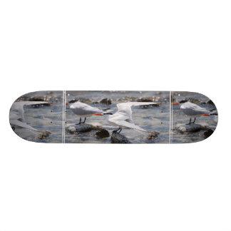 Posing Royal Tern Skate Board Decks