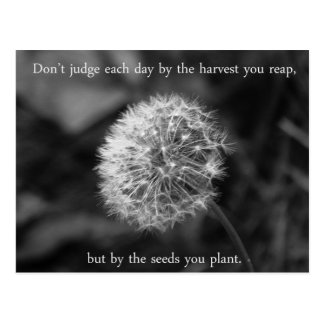 Positive Thinking Saying with Dandelion Postcard