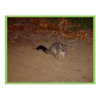 Possum With Red Shinning Eye Post Card