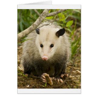 Possums are Pretty - Opossum Didelphimorphia Card