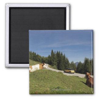 postalm road, weissenbachtal, magnet