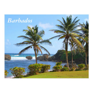 Postcard, Barbados, Beach Scene, Palm Trees Postcard