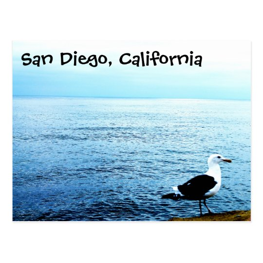Postcard bird San Diego California blue ocean