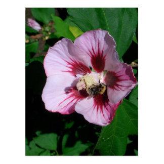 Postcard Blossom