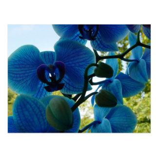 Postcard Blue Orchid
