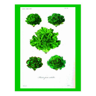 Postcard-Botanicals-Lettuce 3 Postcard