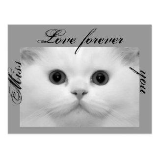 postcard, cat, kit, miss you,love