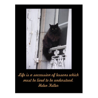 Postcard cat with quote Helen Keller
