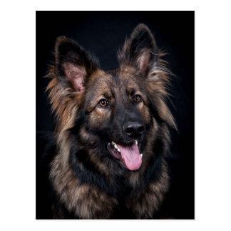 Postcard cute German Shepherd Dog Alsatian