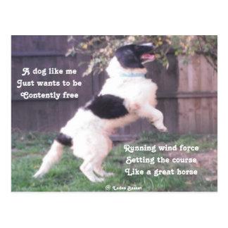 Postcard Dog Horse Poem By Ladee Basset