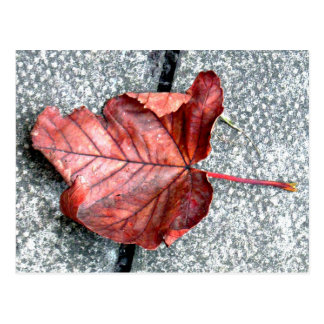 POSTCARD- FALLEN LEAF IN AUTUMN POSTCARD