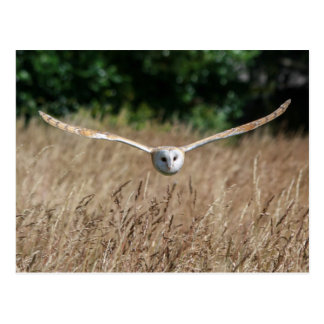 Postcard flying barn owl in flight