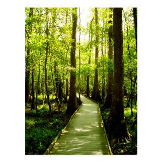 Postcard - Forest Path