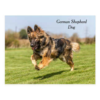 Postcard German Shepherd Dog Alsatian