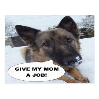 Postcard German Shepherd Give My Mom A Job