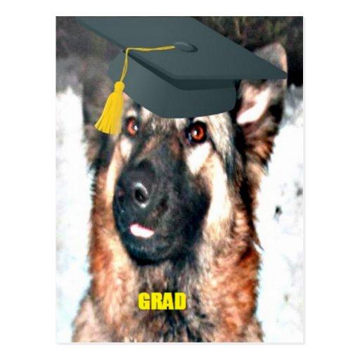 Postcard German Shepherd Grad
