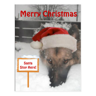 Postcard German Shepherd Santa Stop Here Sign