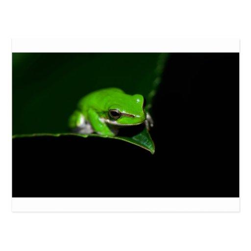 Postcard - Green tree frog on a leaf edge