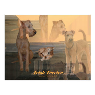 "Postcard ""Irish Terrier """