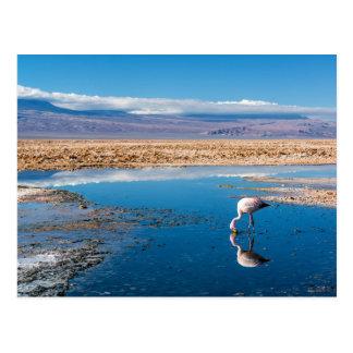 Postcard, Lake in San Pedro de Atacama, Chile Postcard