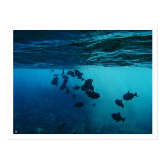 postcard, molokini, hawai'i, diving postcard