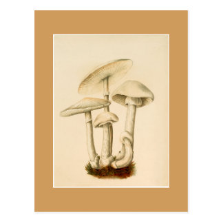 Postcard - Mushrooms