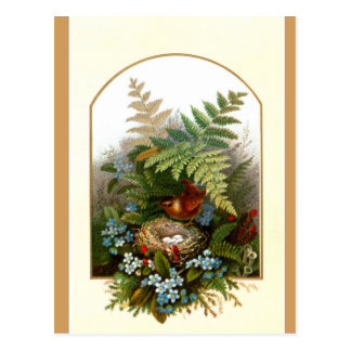 Postcard - Nesting Bird