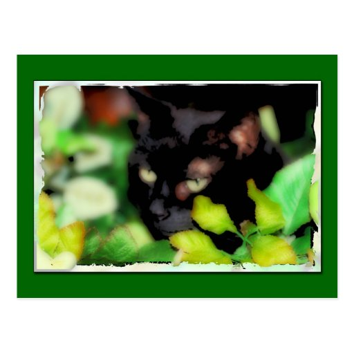 Postcard of a Black Cat