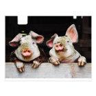 Postcard of happy pigs