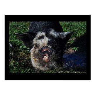 Postcard of Pig. Tane