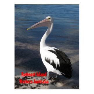 POSTCARD - Pelican