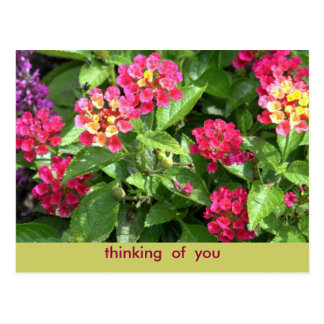 """POSTCARD """"PINK FLORAL/THINKING OF YOU"""""""