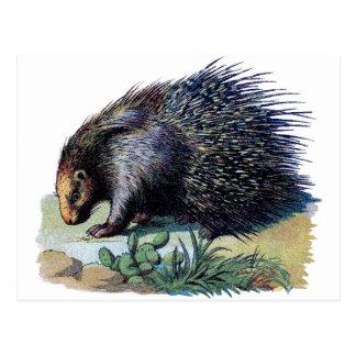 Postcard - Porcupine
