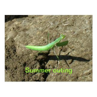 Postcard - Praying mantis
