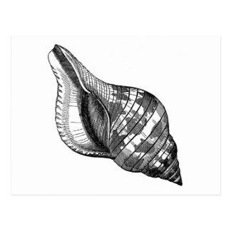 Postcard - Seashell