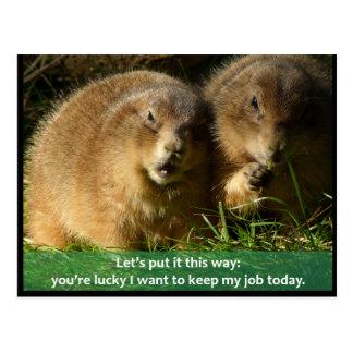 Postcard: Snarky Prairie Dogs Postcard