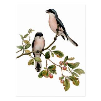 Postcard - Two Birds