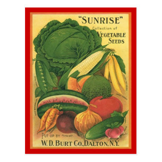 Postcard Vintage Antique Burt Co Vegetable Seeds