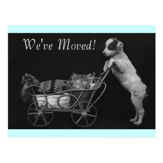 Postcard Vintage Sweet Pets We've Moved  Address