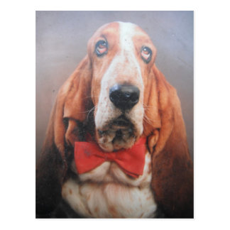 Postcard With Basset Hound In Bow Tie