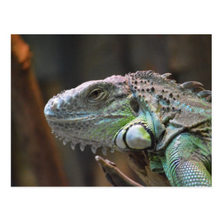 Postcard with head of colourful Iguana lizard