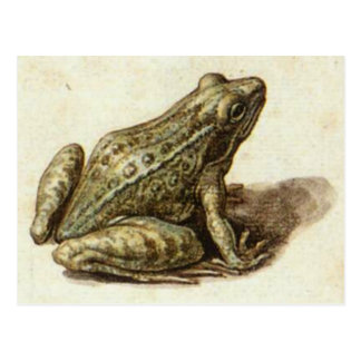 Postcard With Sweet Old Frog