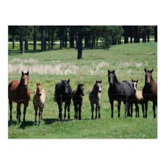 Postcards - Mares & Foals