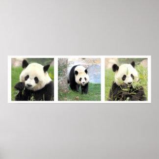 Poster 30x90 giant Panda