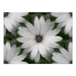 Poster - African Daisy in White