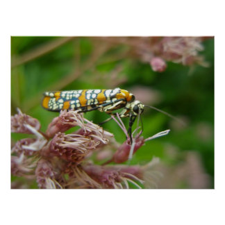 Poster Ailanthus Webworm Moth (Atteva punctella)