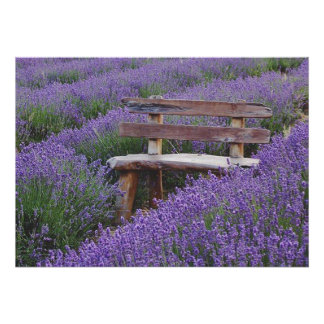 Poster bench in the lavender