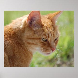POSTER Cat cat chat - photo Jean Louis Glineur